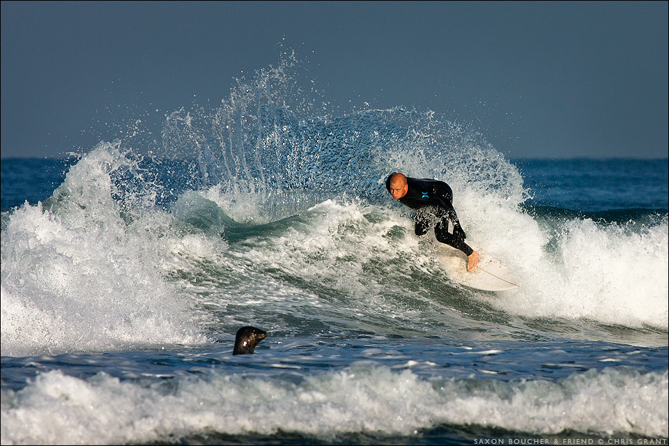 Saxon Boucher wraps a turn while a seal checks out his moves. Chris Grant photo on Boardfolio.com